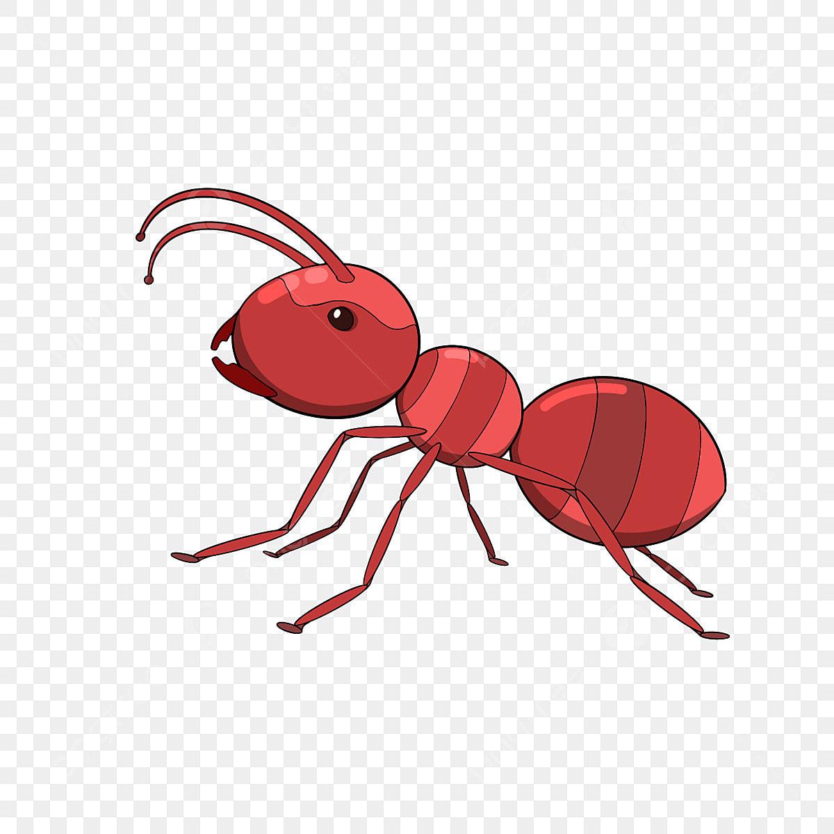 Semut Merah Gambar Png File Vektor Dan Psd Unduh Gratis Di Pngtree