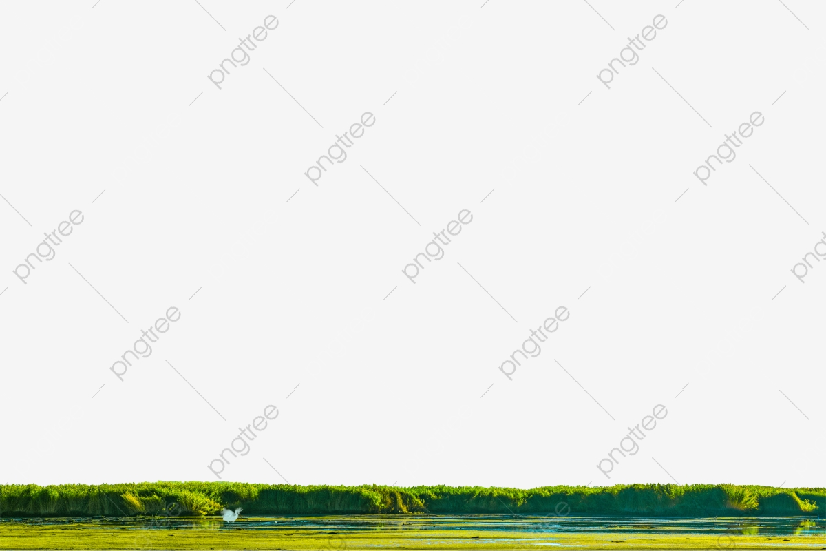 Wetlands Red Crowned Crane Reeds Lake Water Png Transparent Image And Clipart For Free Download