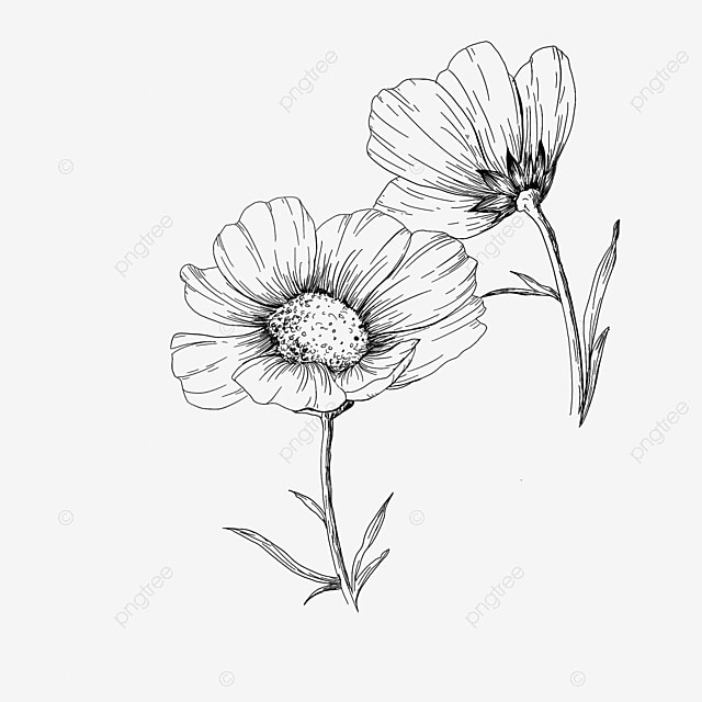 Hand Drawn Flowers Line Drawing Sketch Plant Flowers, Hand Painted, Flowers, Line Drawing PNG and PSD