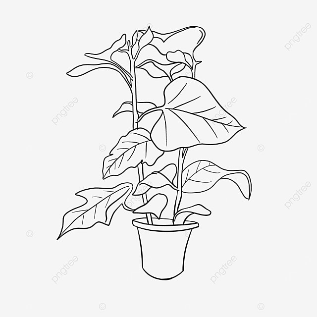 complex plant flower branch plant clipart black and white