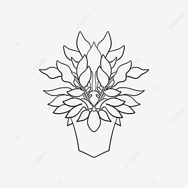 flower pot plant vegetation https upload com upload element