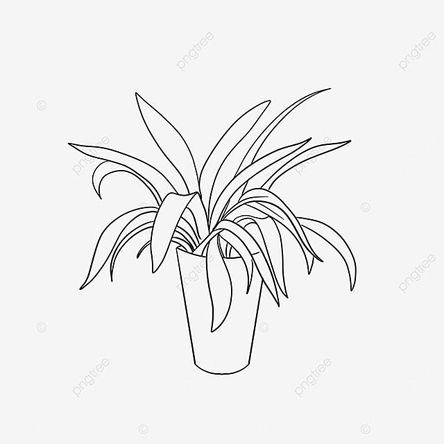 green fresh plant plant clipart black and white