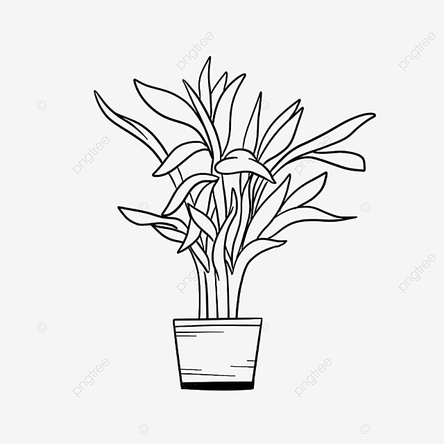 home grown water bamboo potted plant clipart black and white