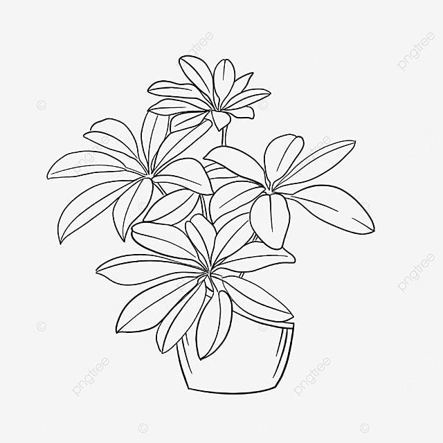 irregular flowerpot plant clipart black and white