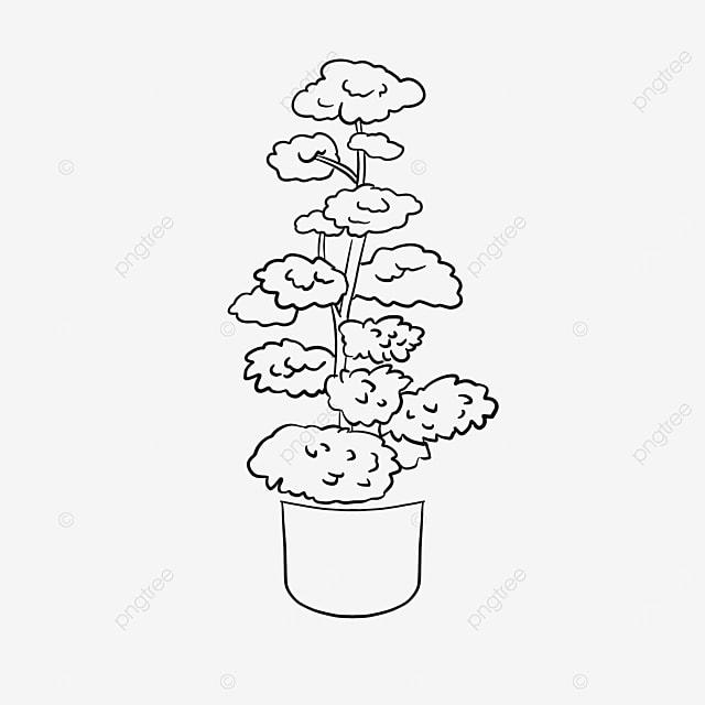 large landscape potted plants https upload com upload element