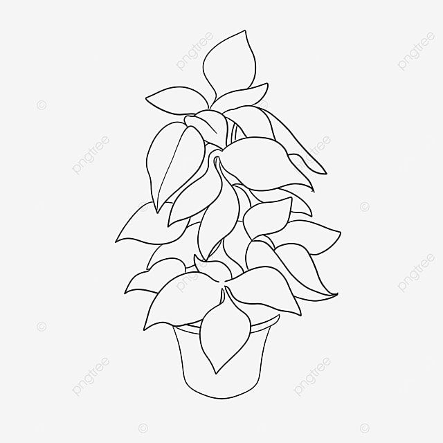 plant clipart black and white