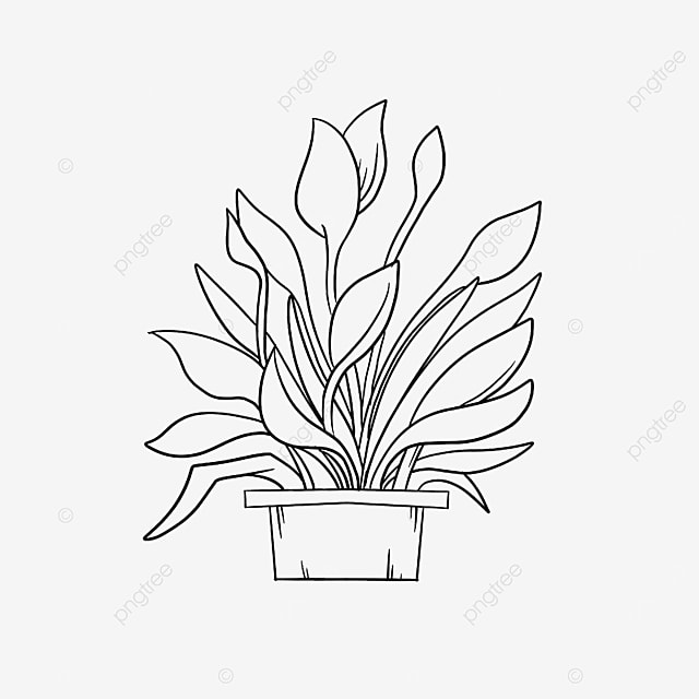 small pot plant clipart black and white