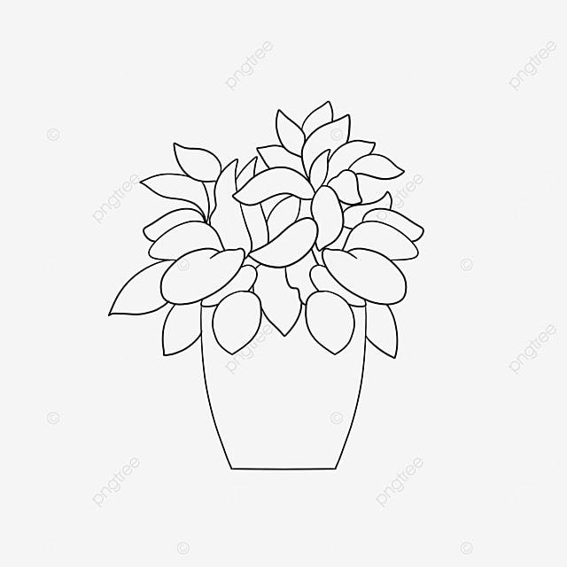 succulent pot plant clipart black and white