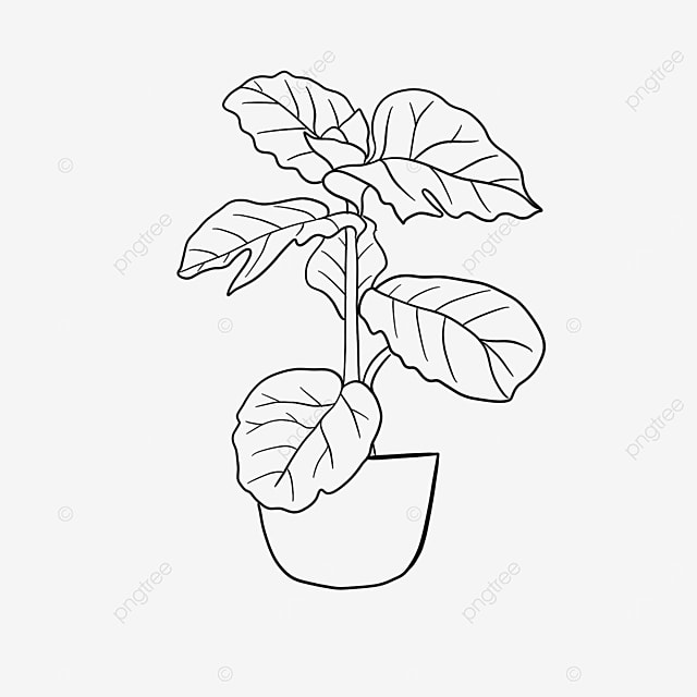 turtle leaf pot plant clipart black and white