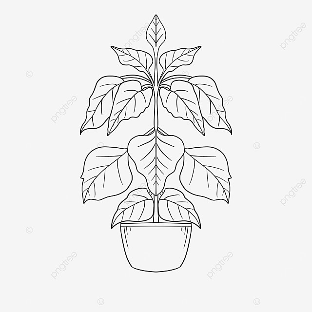 vegetation plant clipart black and white