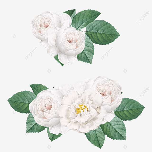 Romantic White Roses Valentine Design, Rose, Bouquet, Floral PNG and PSD