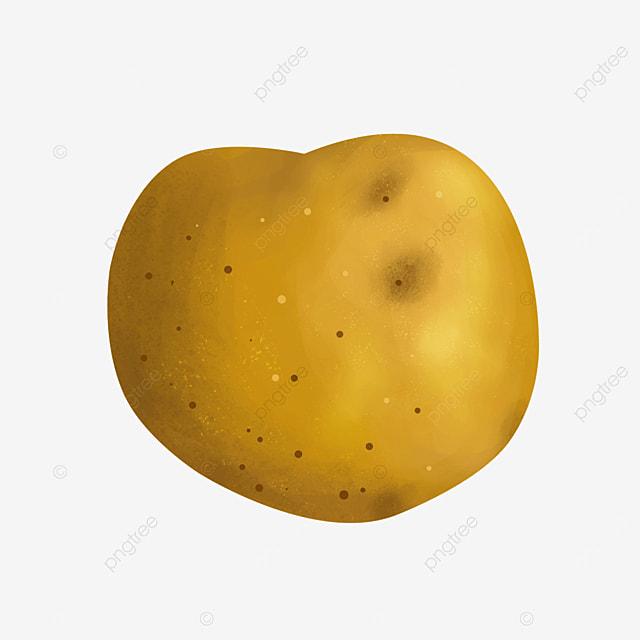 dark brown yam vegetable potato clip art