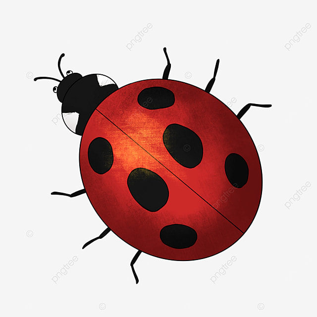 cartoon insect clipart ladybug clipart