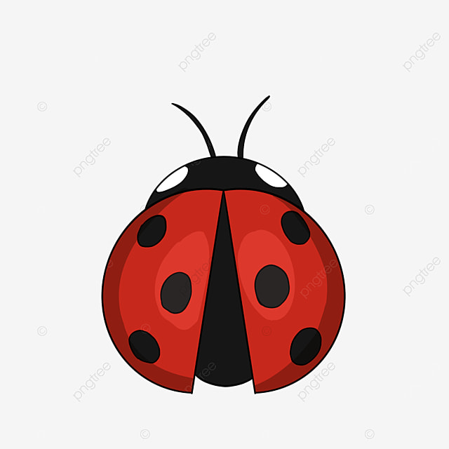 cartoon insect ladybug clipart