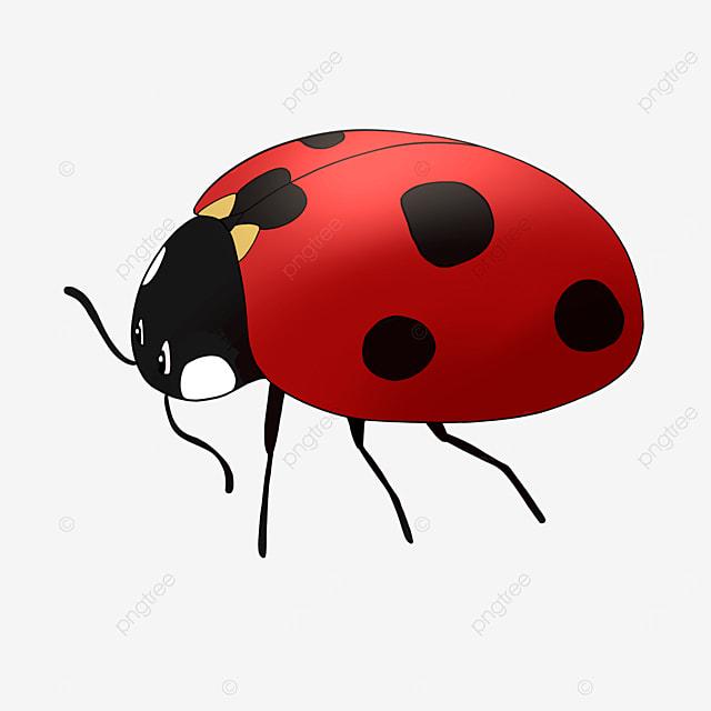 cute cartoon ladybug clipart red