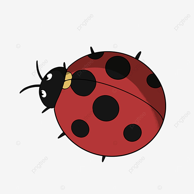 cute insect ladybug ladybug clipart insect