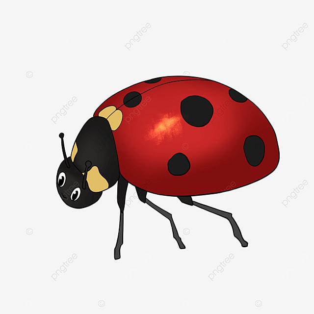 cute ladybug cartoon ladybug clipart