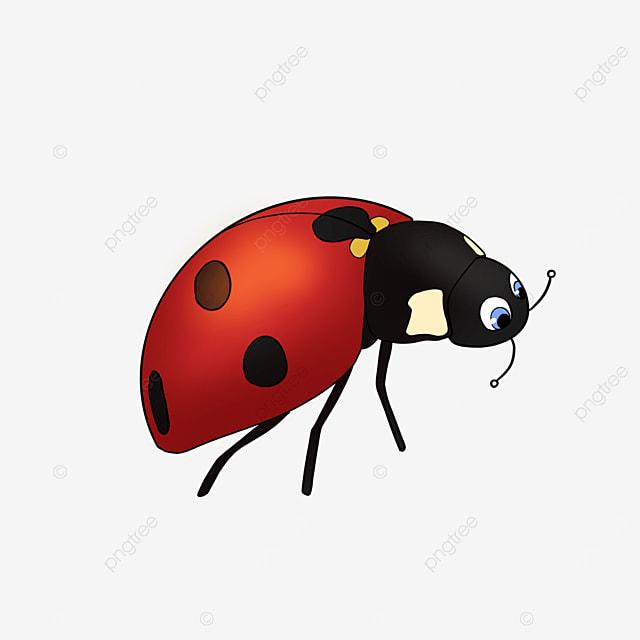 cute ladybug cartoon style ladybug clipart