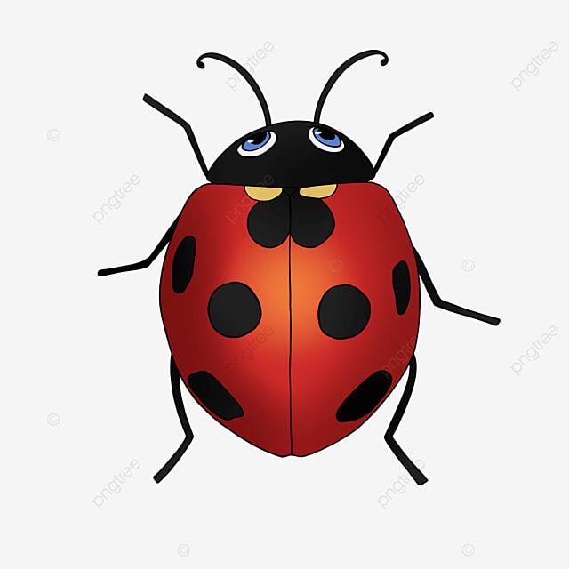 cute ladybug ladybug clipart