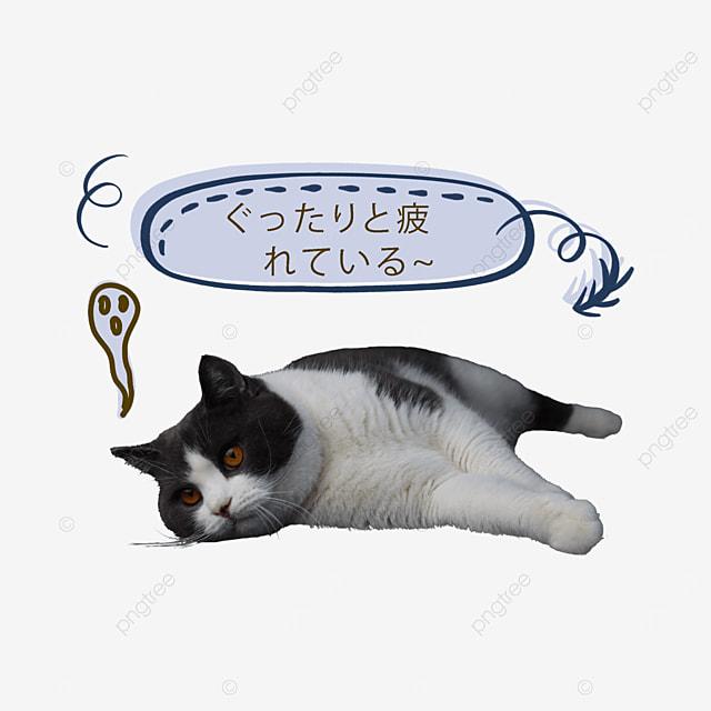 cute tired cat