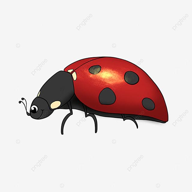 insect cartoon ladybug clipart