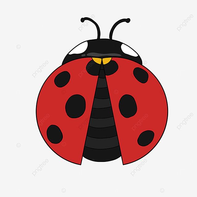 insect clip art ladybug clip art