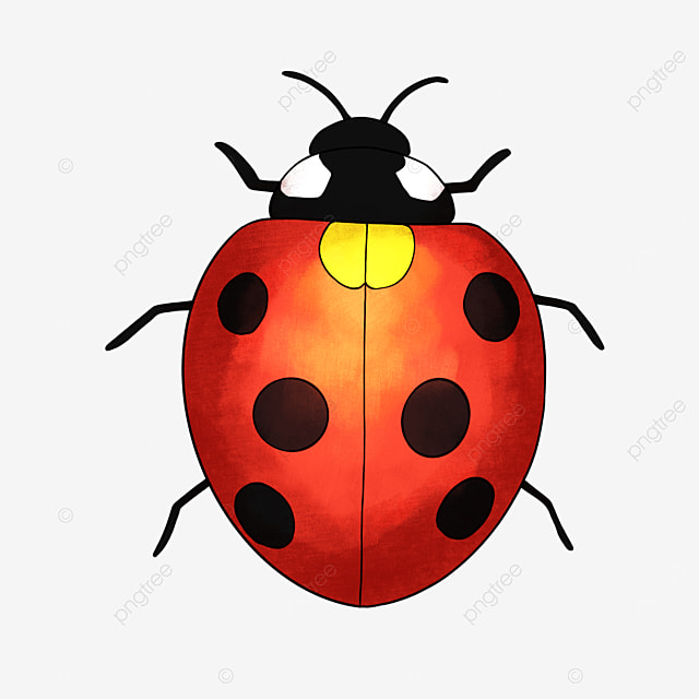 insect clipart cartoon ladybug clipart