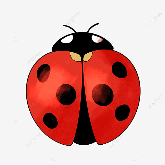 insect clipart cartoon style ladybug clipart