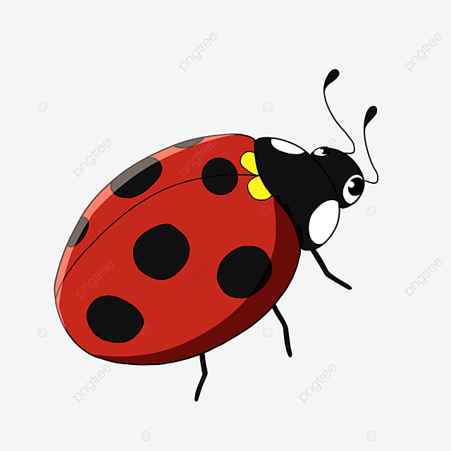 insect ladybug clipart cartoon style