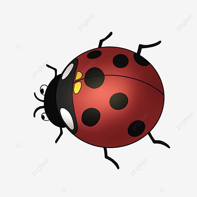 ladybug cartoon insect ladybug clipart