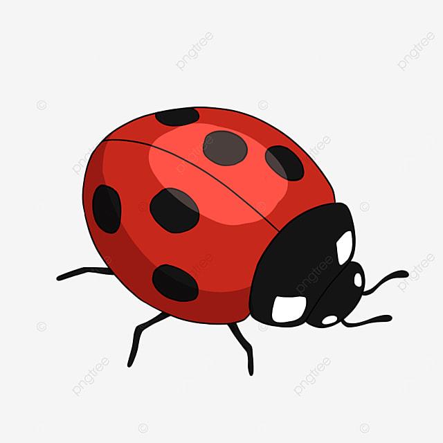 ladybug clipart cartoon insect