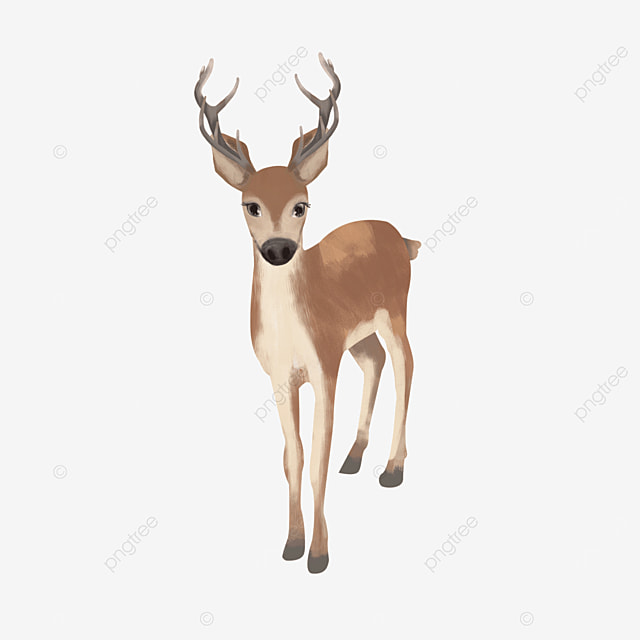 standing frontal small animal mammal elk clipart