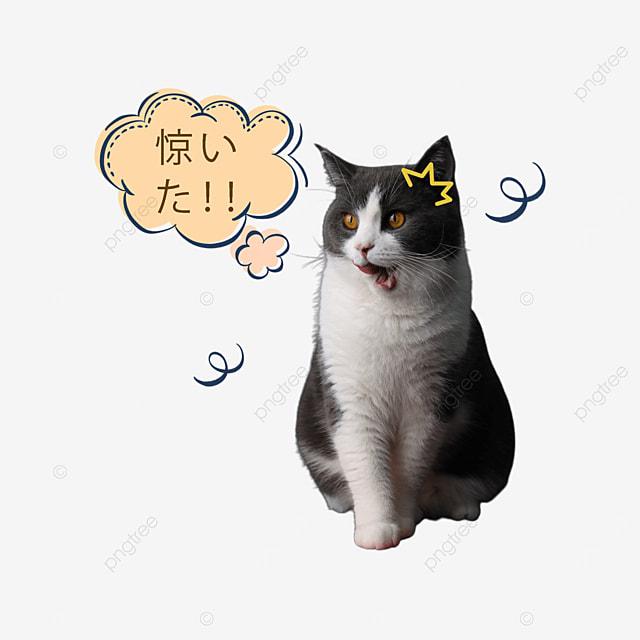 surprised cat british short blue and white emoticon pack