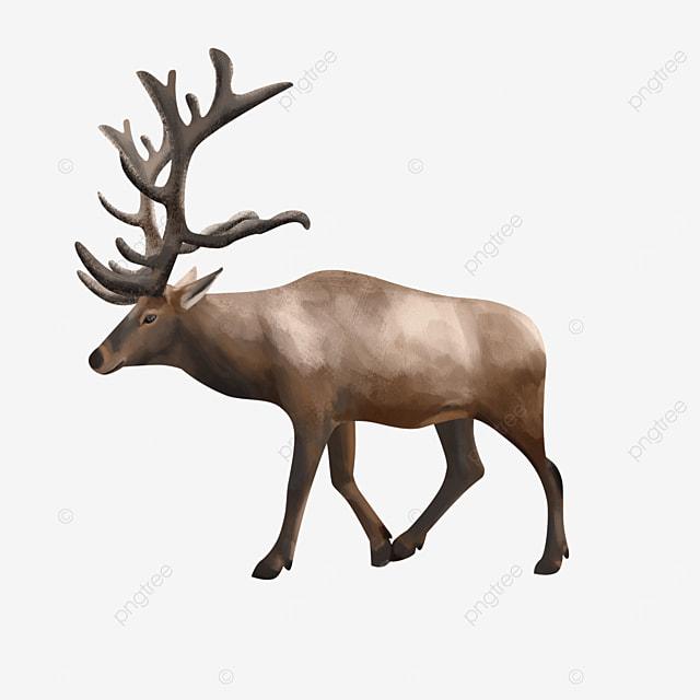 wild mammal elk clip art