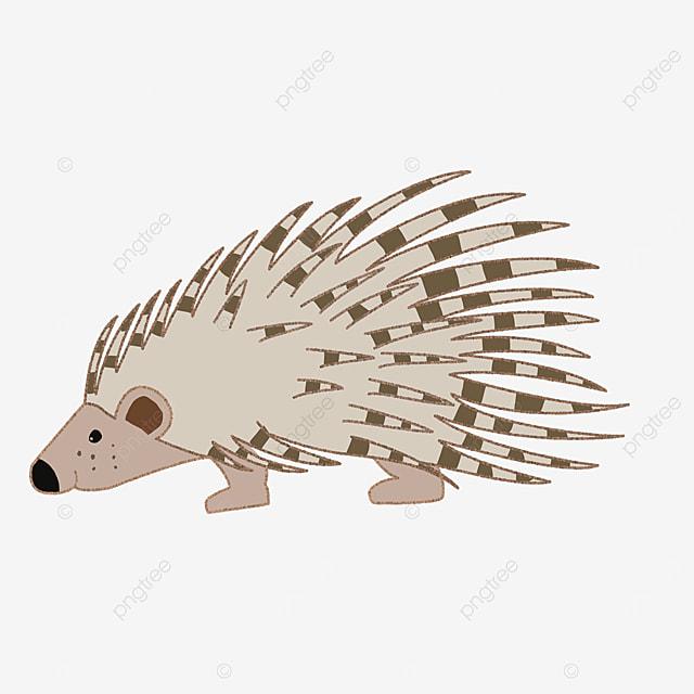 mammal porcupine clip art