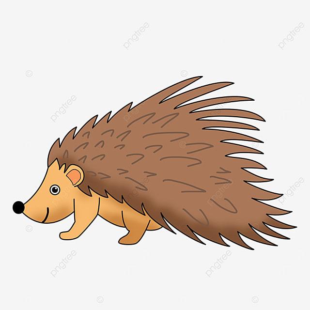 north american porcupine clip art