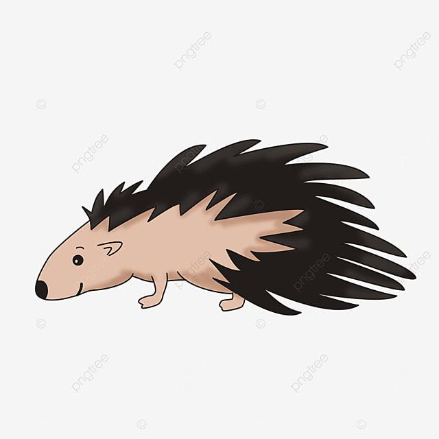 porcupine clipart illustration