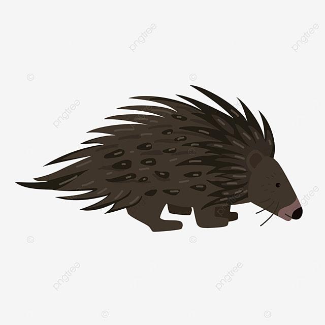 wild porcupine clip art