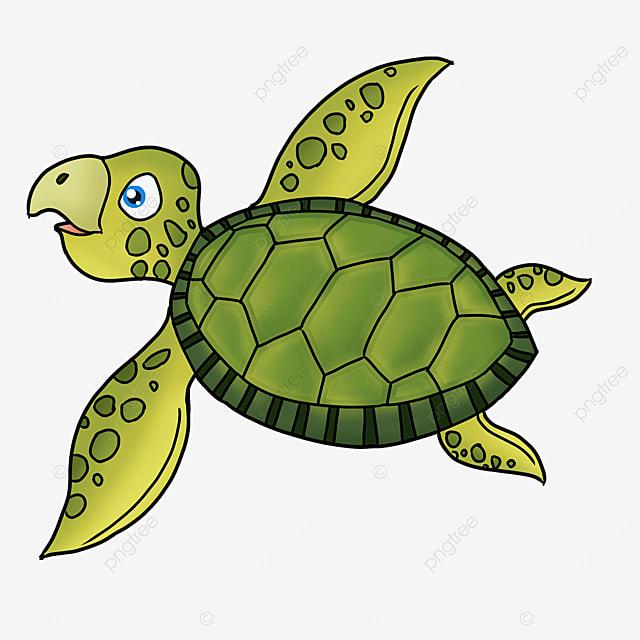 cartoon style cute dark green turtle shell but green skin turtle clipart