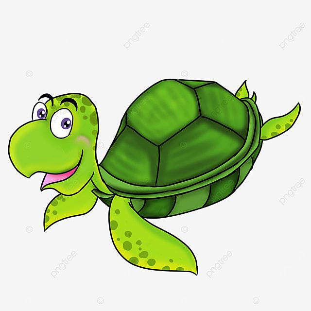 cartoon style raw green turtle shell tender green skin turtle clipart