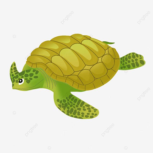 golden yellow tortoise shell sea turtle clip art