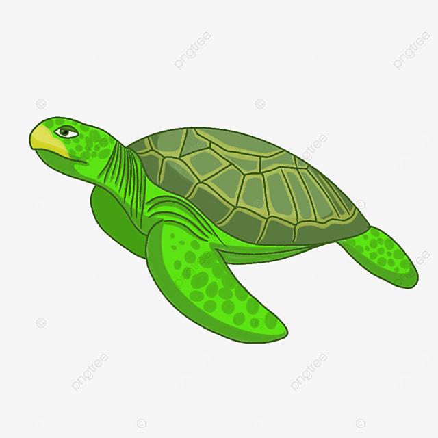 green sea animal turtle clipart