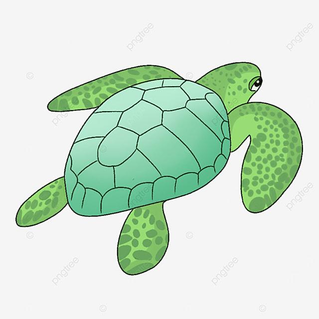 green turtle clip art