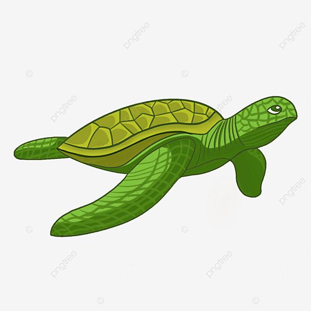 light green turtle shell sea turtle clip art