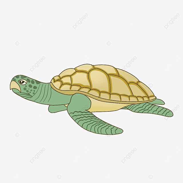 natural staying turtle clipart