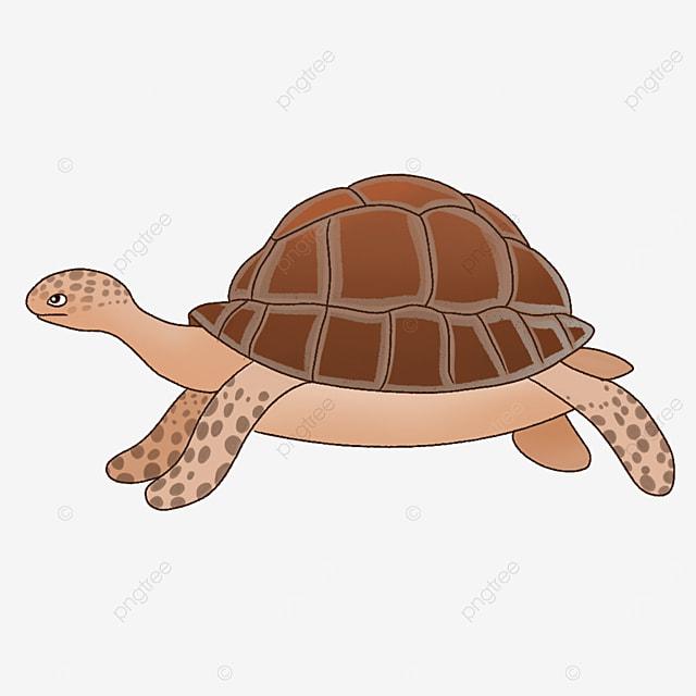 sea turtle clip art in brown tortoise shell
