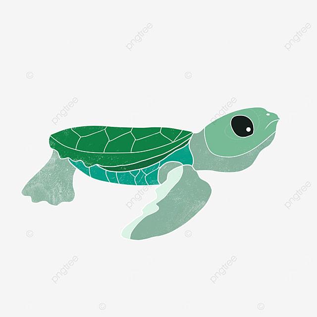 cartoon animal sea turtle clipart