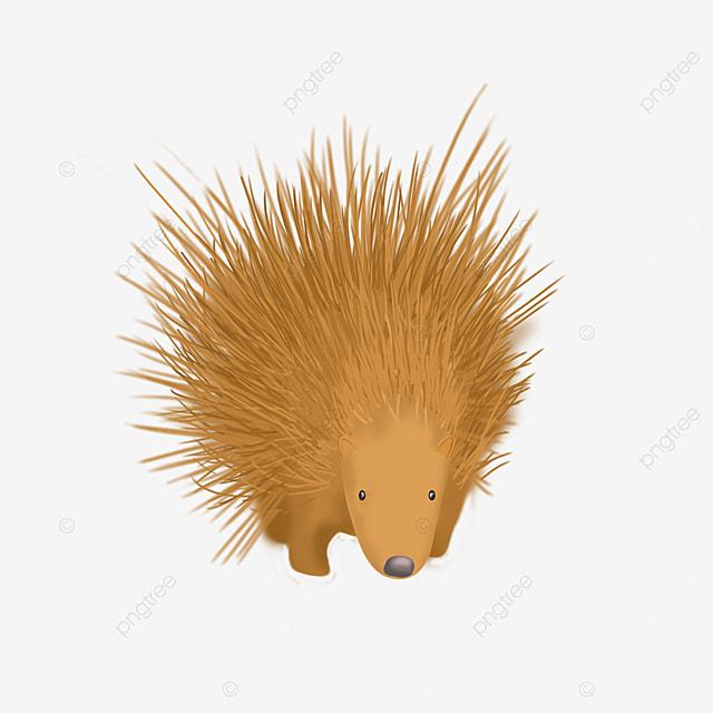 acupuncture porcupine clip art