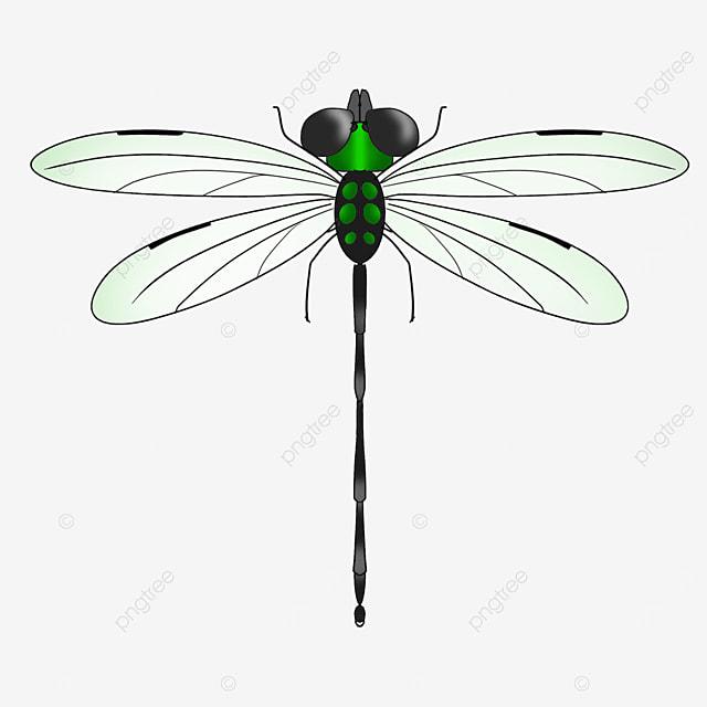 army green big eyed dragonfly clip art