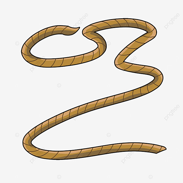 brown cartoon rope rope knot clipart